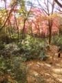 [鎌倉][紅葉]鎌倉獅子舞