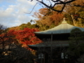 [鎌倉][紅葉]瑞泉寺