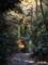目黒自然教育園