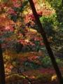 [紅葉]目黒自然教育園
