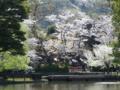 鶴岡八幡宮 神苑 牡丹園