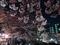 大岡川の夜桜