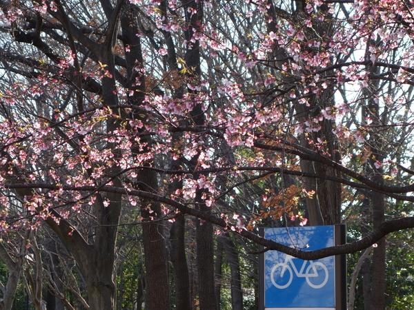 府中市美術館の桜