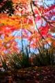 京都新聞写真コンテスト きれいだね。あれ?