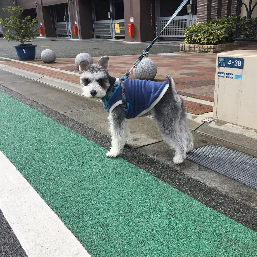 f:id:ko-kakuno:20190204113416j:image