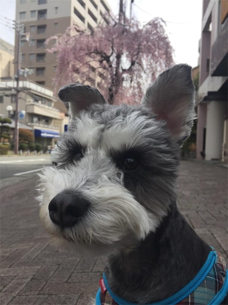 f:id:ko-kakuno:20190405102338j:image