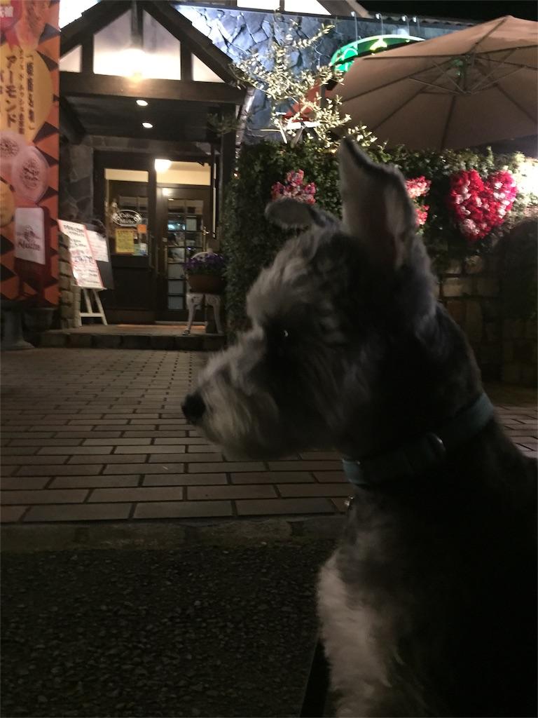f:id:ko-kakuno:20190410155233j:image