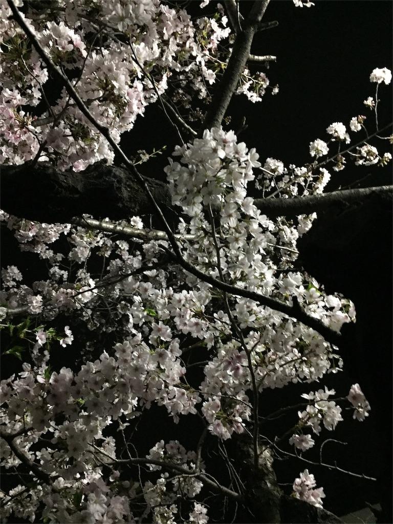 f:id:ko-kakuno:20190412111552j:image