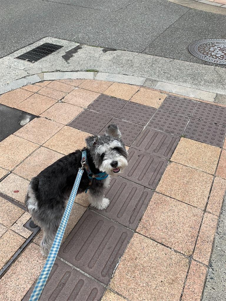 f:id:ko-kakuno:20190531225825j:image