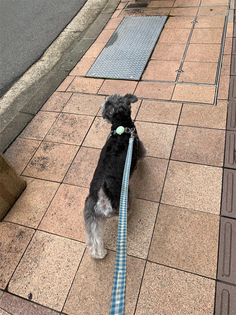 f:id:ko-kakuno:20190718233209j:image