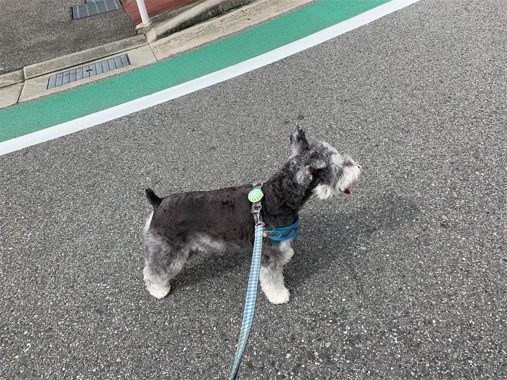 f:id:ko-kakuno:20190905105615j:image