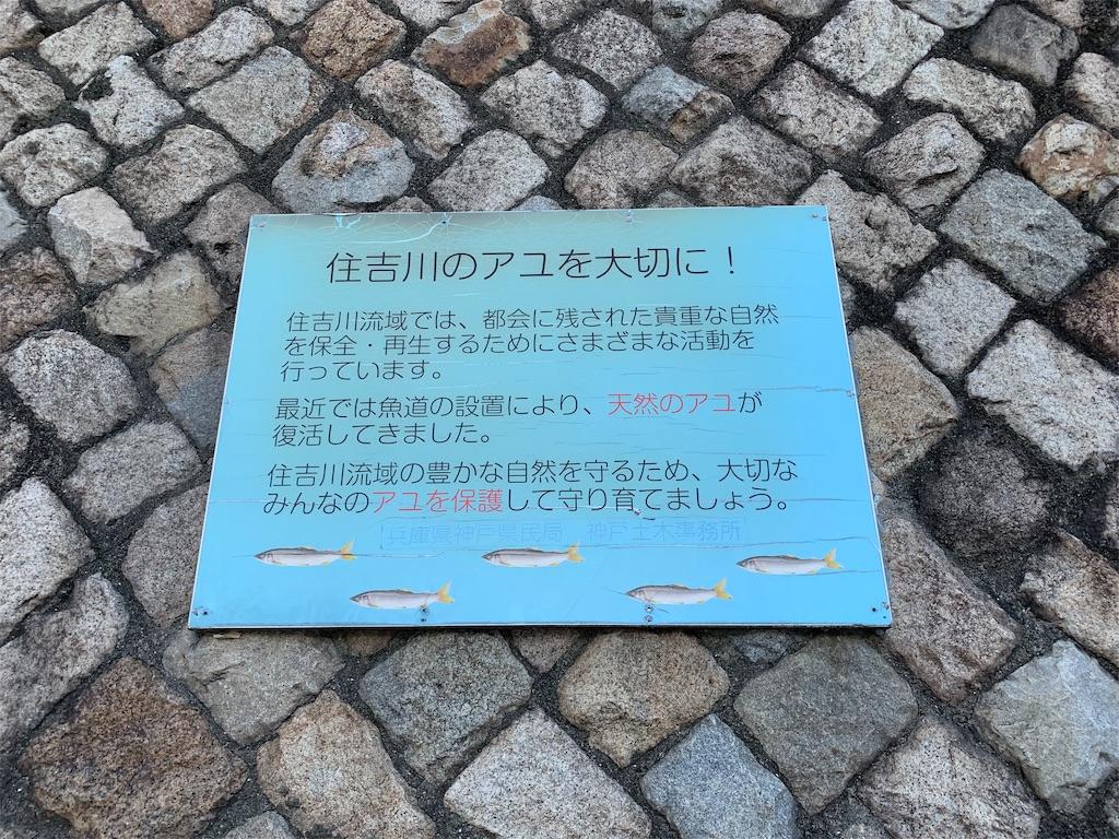 f:id:ko-kakuno:20190919001249j:image
