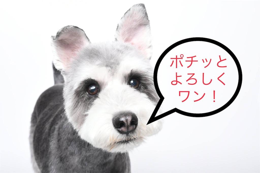 f:id:ko-kakuno:20191010154009j:image