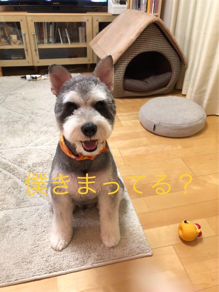 f:id:ko-kakuno:20191015111605j:image