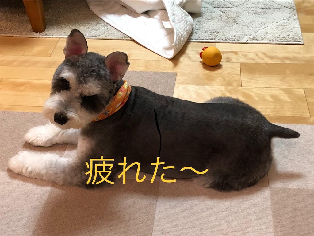 f:id:ko-kakuno:20191015112152j:image