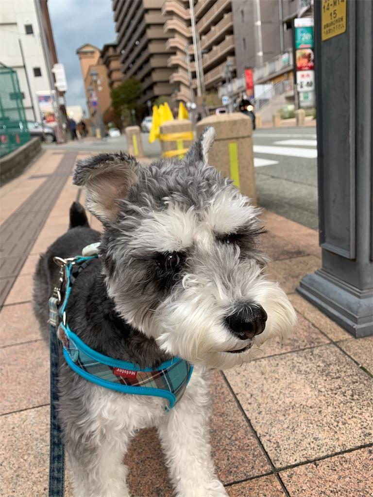 f:id:ko-kakuno:20191111103507j:image