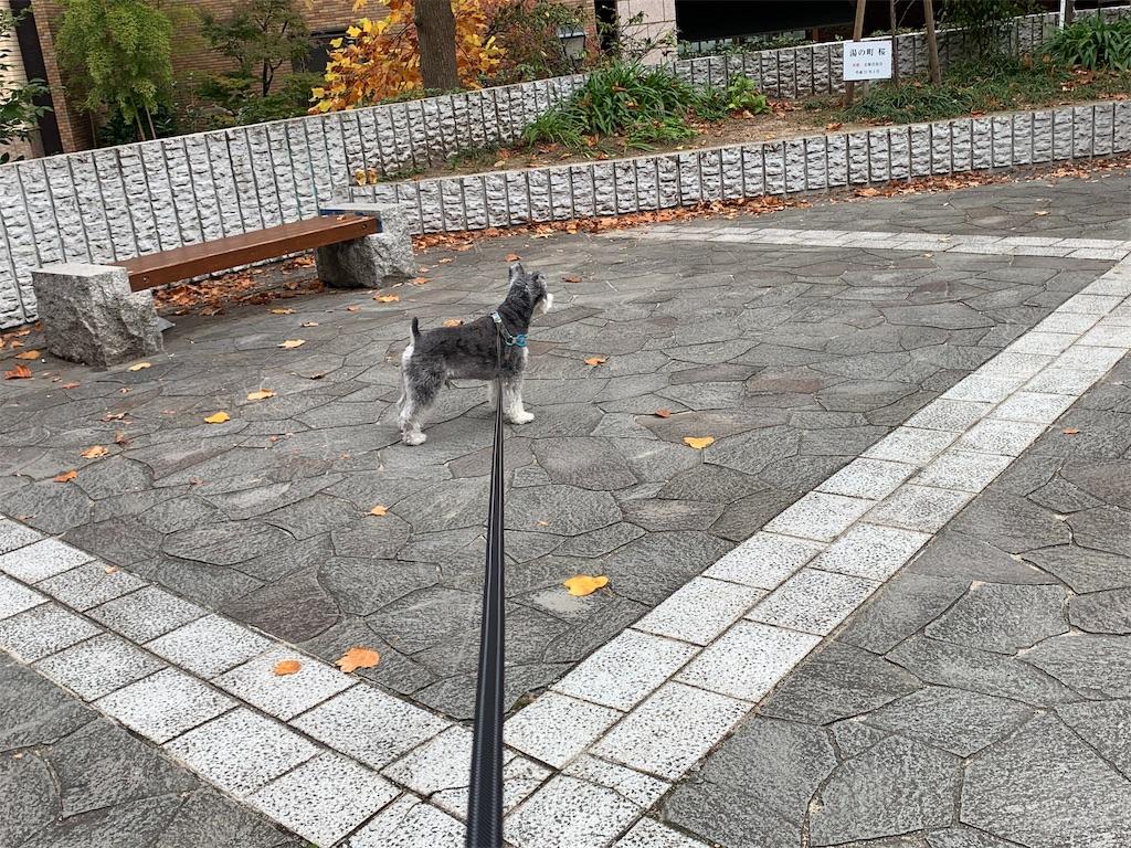 f:id:ko-kakuno:20191118221352j:image