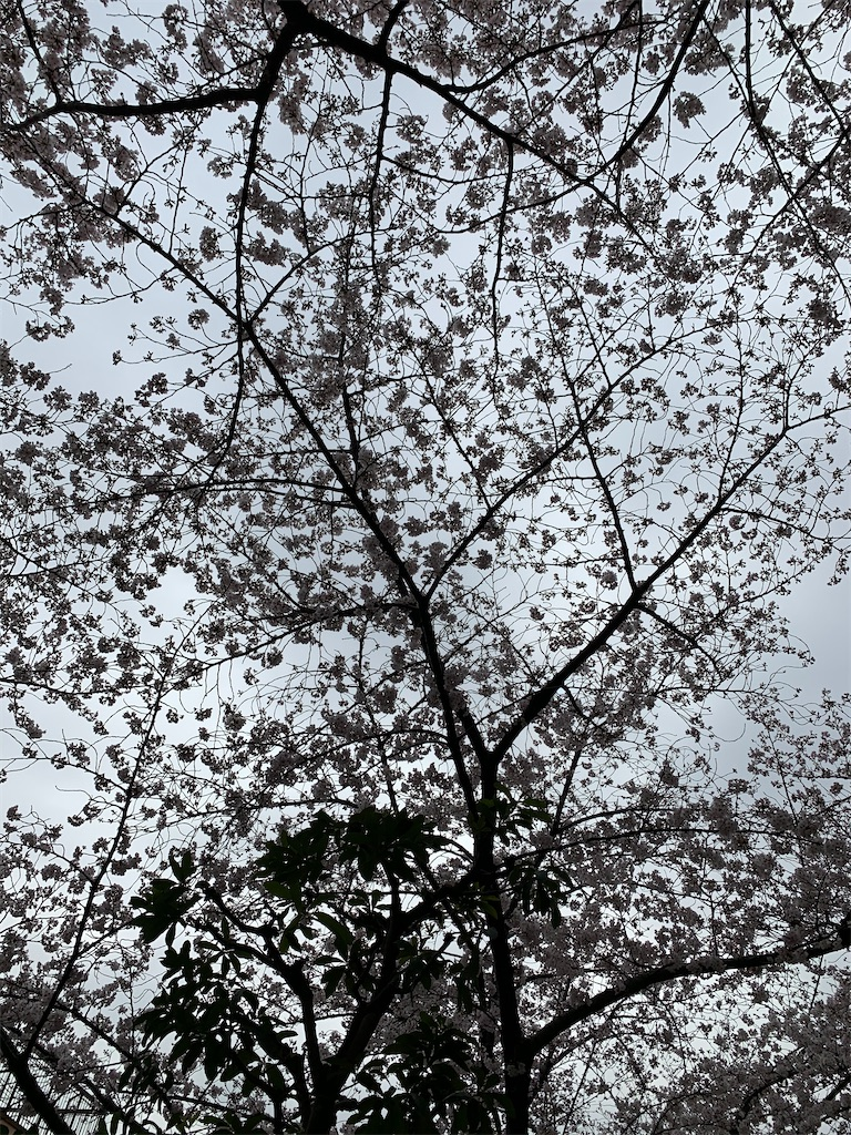 f:id:ko-kakuno:20200331232941j:image