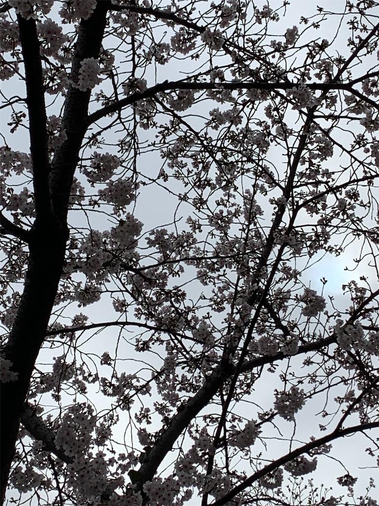 f:id:ko-kakuno:20200401001536j:image