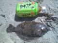 [釣果][マコガレイ]マコガレイ(20090315)