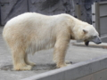 旭山動物園④