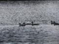 ウトナイ湖④