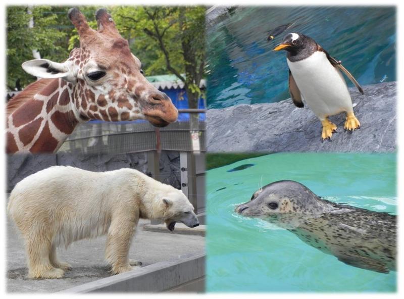 旭山動物園⑥