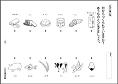 f:id:kobato-kyozai:20200728101636p:plain