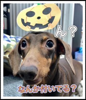 f:id:kobato-kyozai:20201009153249p:plain