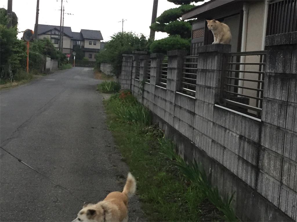 f:id:kobaton0029:20170627210320j:image