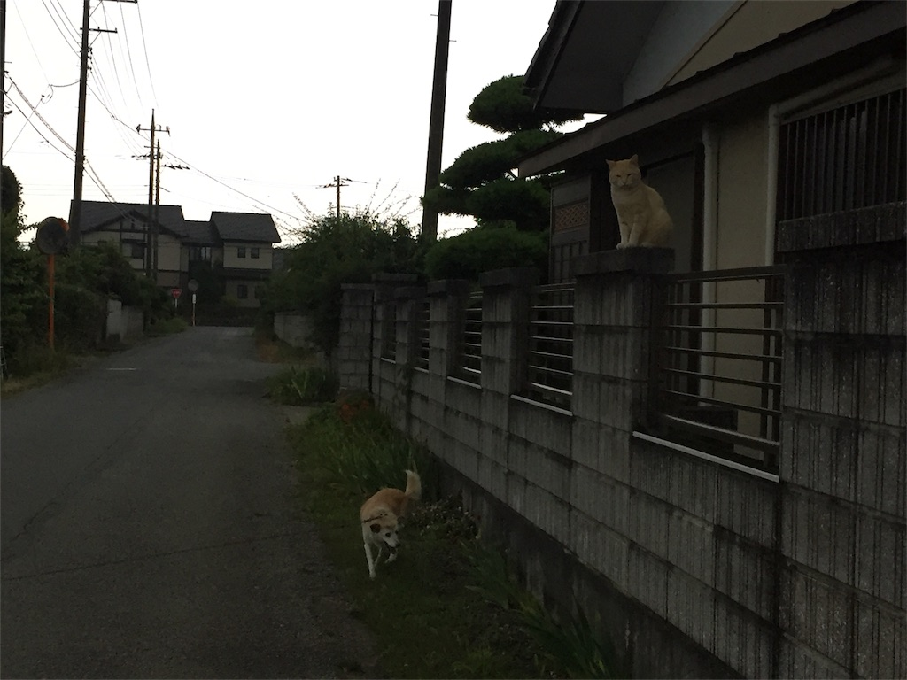 f:id:kobaton0029:20170627210338j:image