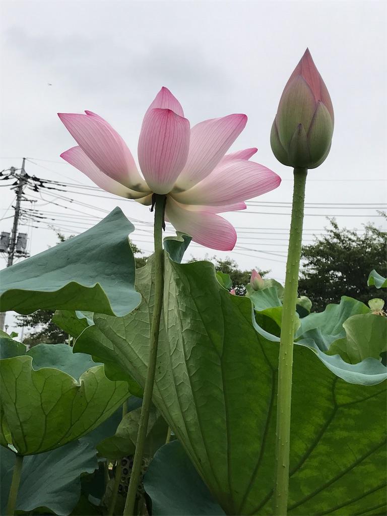 f:id:kobaton0029:20170728070529j:image
