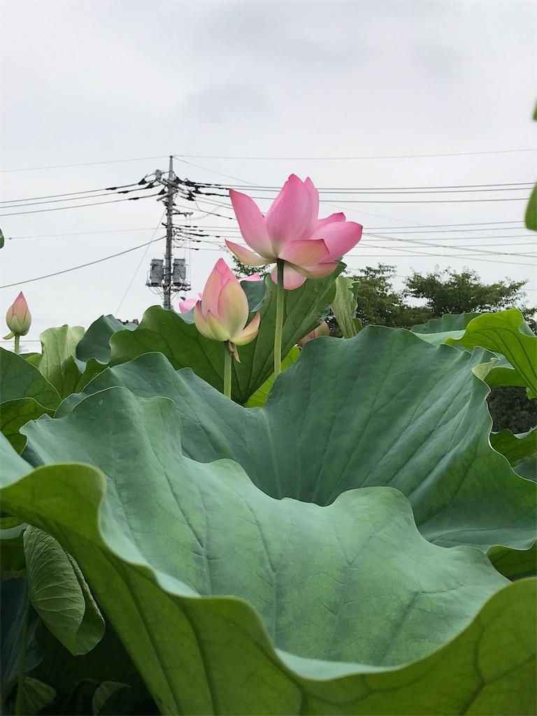 f:id:kobaton0029:20170824003516j:image