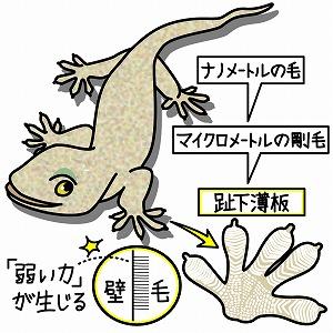 f:id:kobayashinitya:20200418233007j:plain