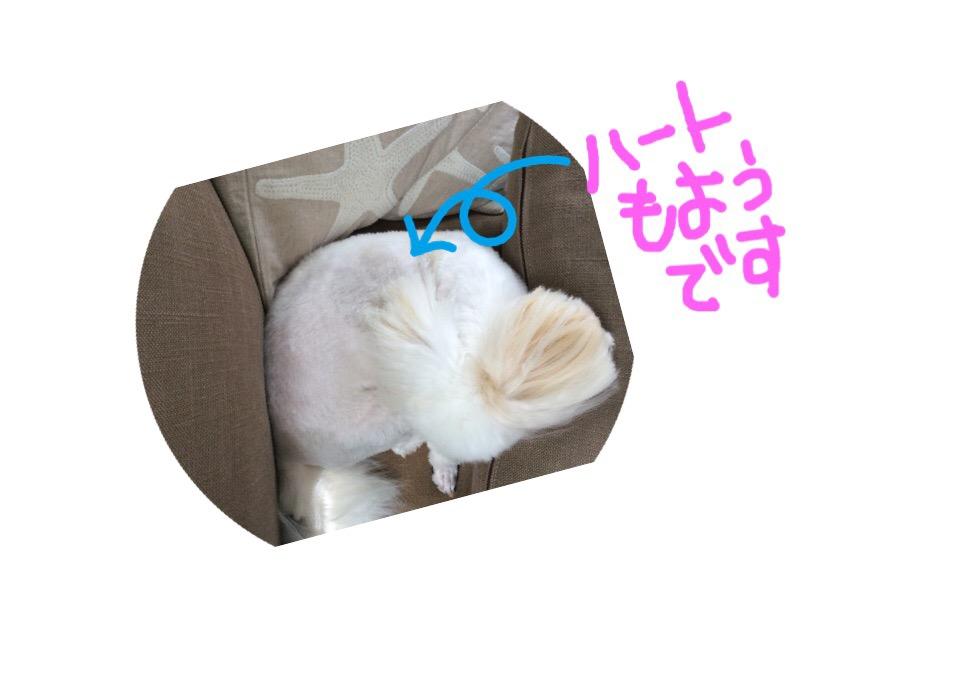 f:id:kobayuki0326:20170807105542j:plain