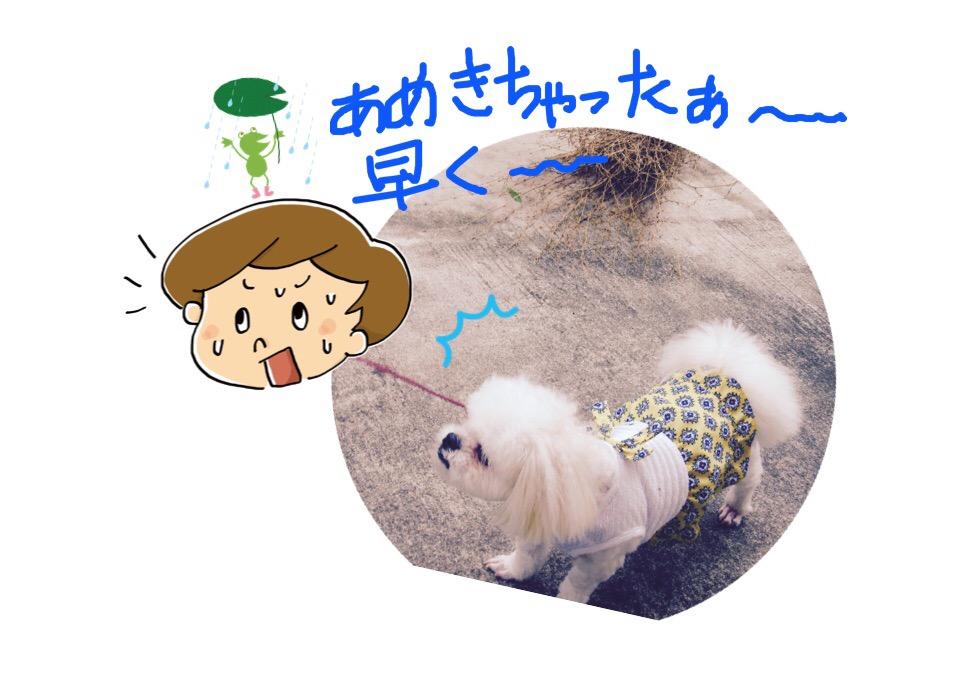 f:id:kobayuki0326:20170814104802j:plain