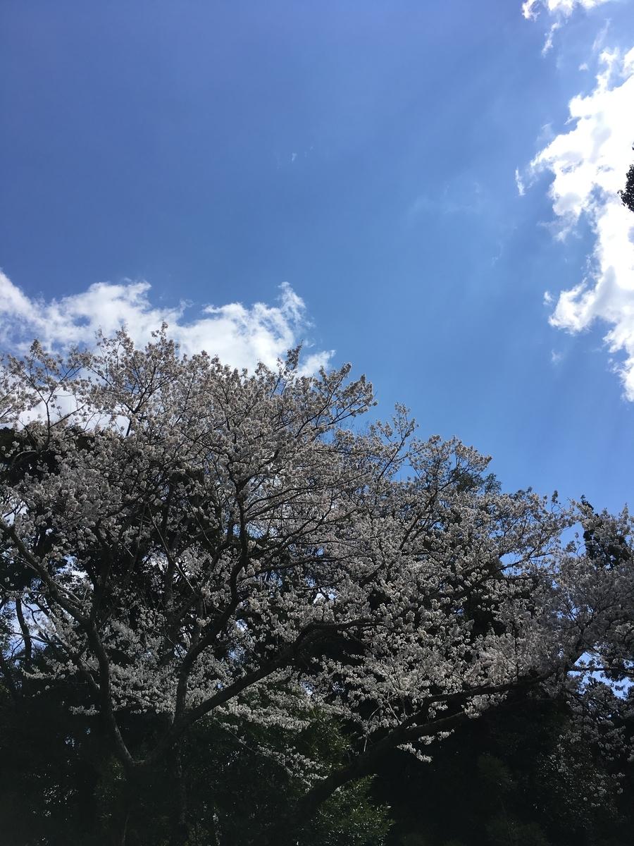 f:id:kobe-hidamari-law:20190401104049j:plain