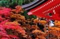 京都新聞写真コンテスト 比叡山 大講堂を飾る紅葉