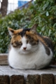『京都新聞写真コンテスト 猫まんじゅう』
