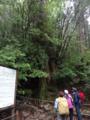 [2013-05-17][屋久島][縄文杉][登山][三代杉]