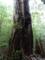 [[2013-05-17][屋久島][縄文杉][登山]]