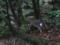 [2013-05-17][屋久島][縄文杉][鹿][登山]