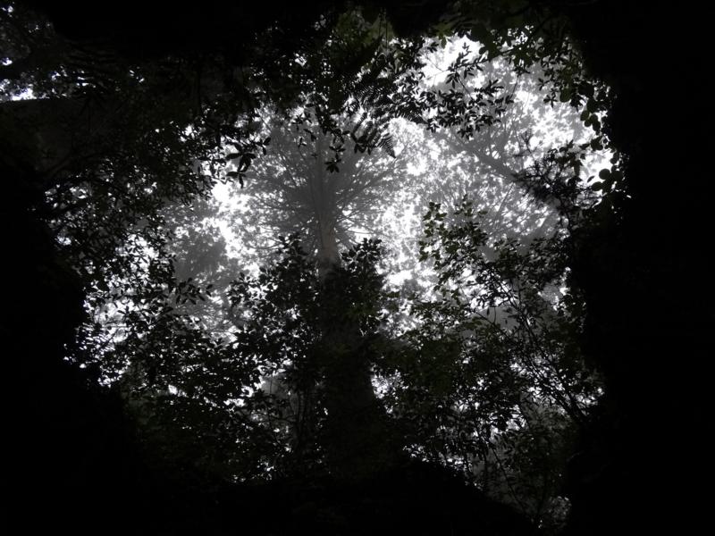 [2013-05-17][屋久島][縄文杉][登山][ウィルソン株]