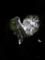 [2013-05-17][屋久島][縄文杉][登山][ウィルソン株][ハート]