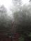 [2013-05-17][屋久島][縄文杉][登山][大王杉]