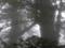 [2013-05-17][屋久島][縄文杉][登山][夫婦杉]