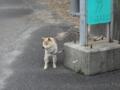 [[2013-05-18][屋久島][安房][トッピー][高速船]-05-18]