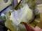 [2013-05-18][屋久島][うずまき団子][スイーツ][トッピー][高速船]