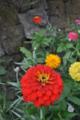 [2013-05-18][鹿児島][仙巌園][桜島]