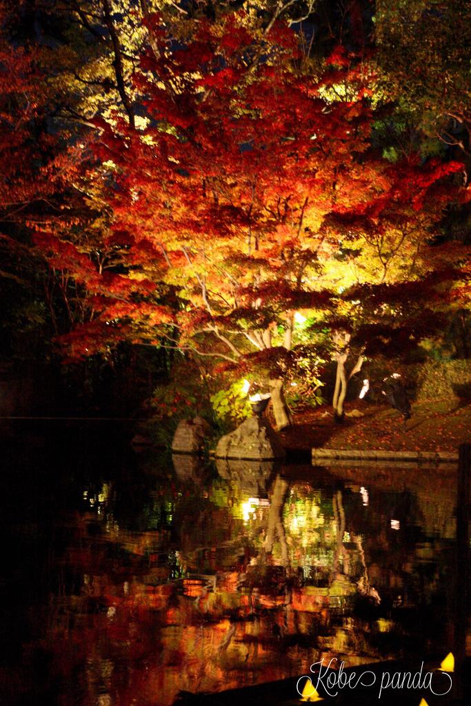 甲子園会館 ライトアップ